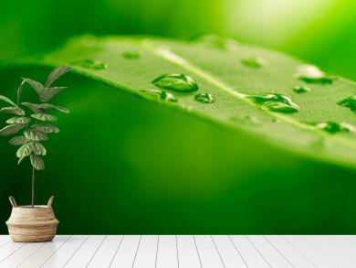 green leaf, nature background