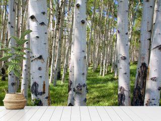 Birkenwaldpanorama