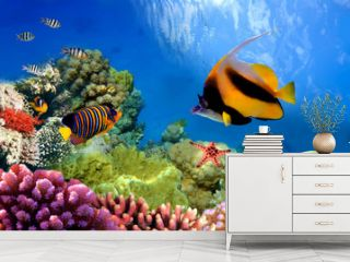 Marine life on the coral reef