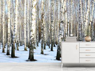 Sunny snow birch grove in december