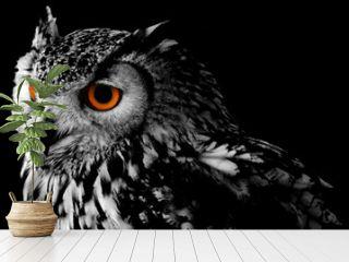 Bengali Eagle Owl (Bubo bengalensis)