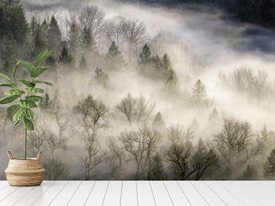 Fog Rolling Over Forest in Oregon