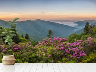 Blue Ridge Mountains, Rhododendron, sunrise