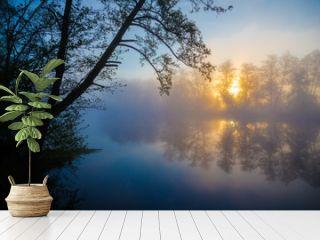 Morning fog on a river