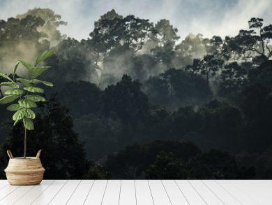 Landscape of Tropical rain forest, Asia