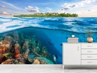 Hawksbill Sea Turtle exploring coral reef under water surface