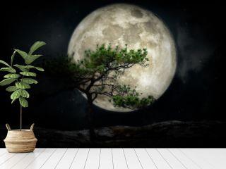 full moon over on pine tree