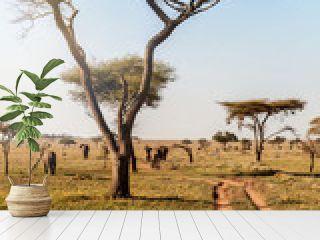 Group of elephants walking in beautiful national park Serengeti, Tanzania, Africa