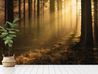 Dark mystical autumn forest with fog and warm sunlight