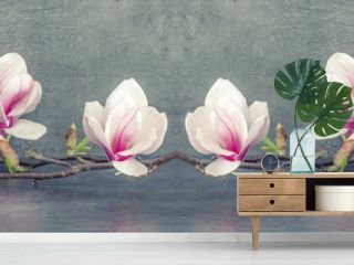 Beautiful blooming magnolia branch isolated on grey anthracite background panorama banner long