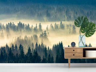 misty nature background. fog in the mountain valley. landscape with coniferous forest view from the top of a hill. fantastic glowing scenery