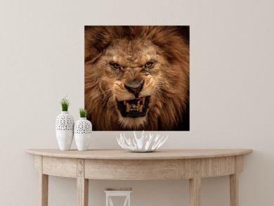 Close-up shot of roaring lion
