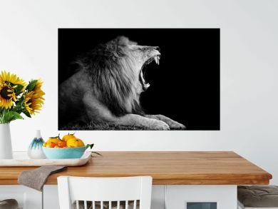 Lion on dark background