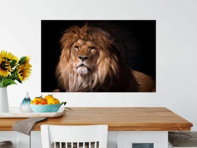 portrait of a lion looking