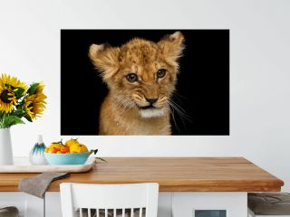 Funny Portrait of Cute Lion Cub With Curious face Isolated on Black Background, front view